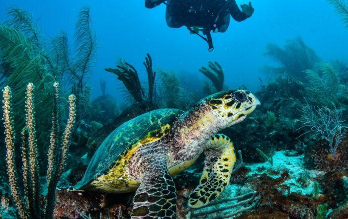 fotografia tortuga y buzo en los roques